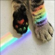 RainbowCat379